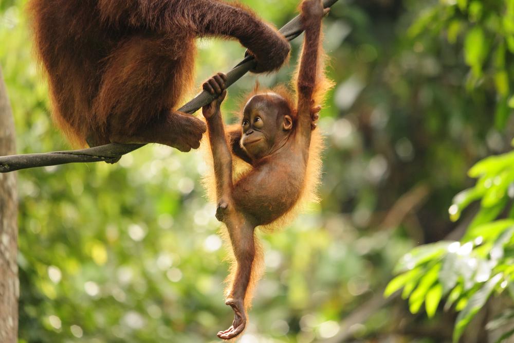 Dünyanın En Büyük 3 Adası Borneo