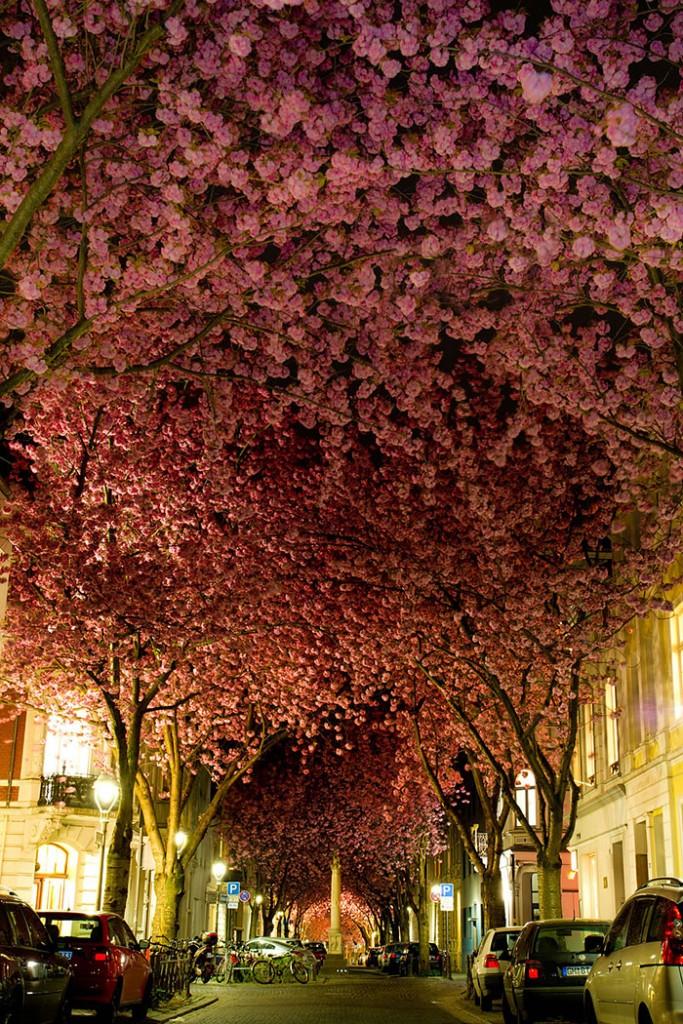 Bonn, Almanya