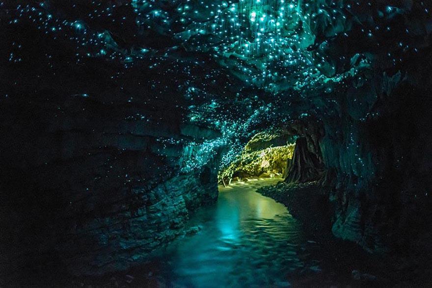 aGlowworms Mağarası , Yeni Zelanda