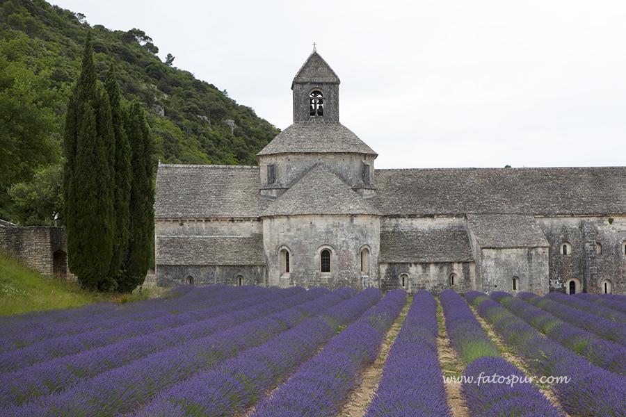 Abbaye Notre-Dame de Senanque (2)