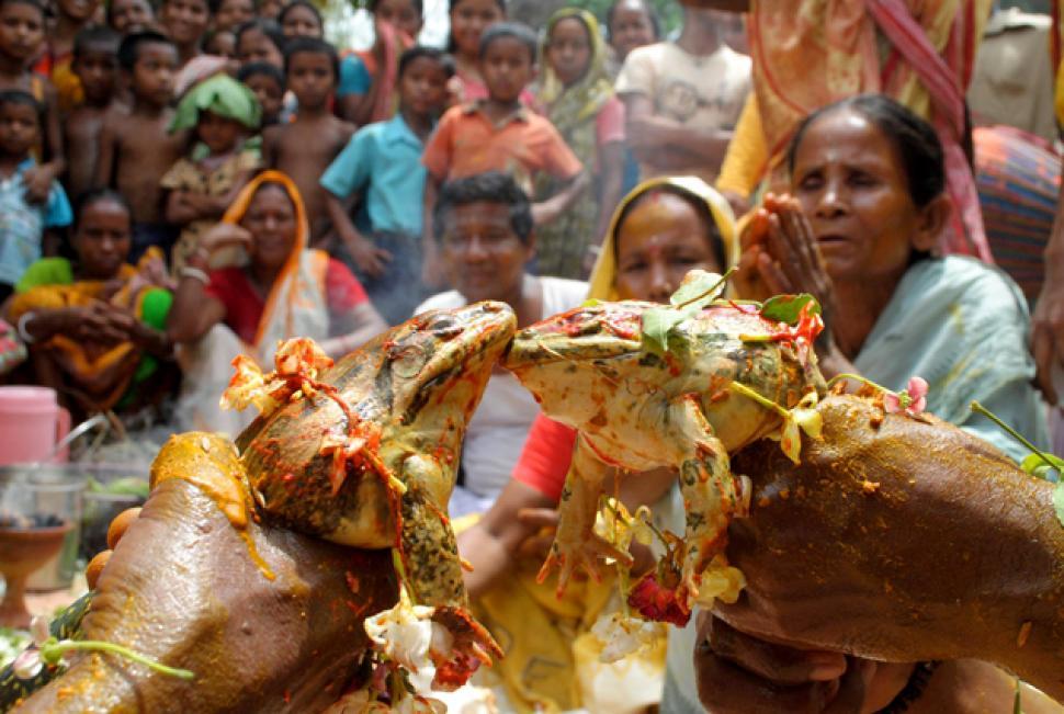 Kurbağaların Evlendirilmesi