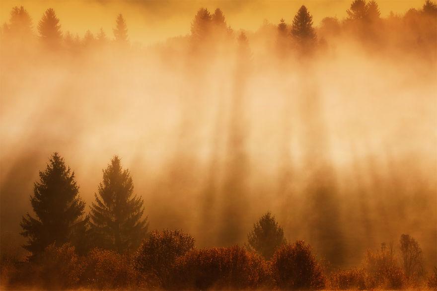 Puslu Orman ve Işık Huzmeleri