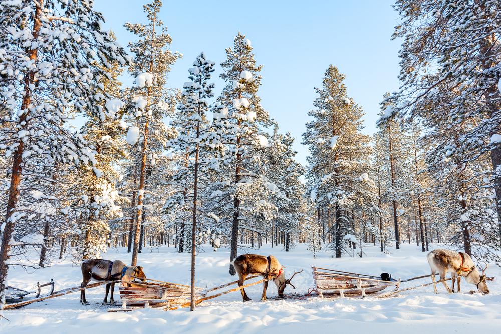 Lapland Geyik Safarisi